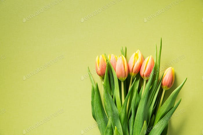 Bunch of orange tulip flowers.