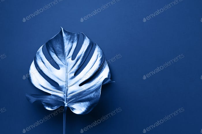 Exotischer Sommertrend im minimalen Stil. Tropische Palme Monstera Blatt auf klassischem blauem Hintergrund
