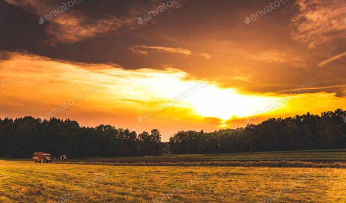 Fodder for cattle. Swathing grass in a meadow with tractor at sunset