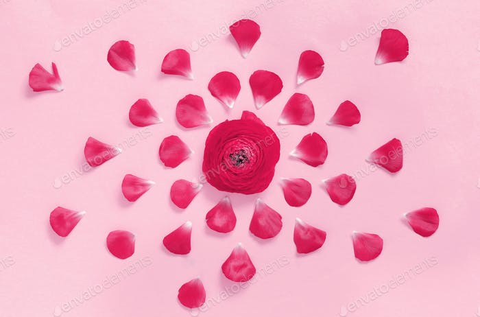 Pink flowers on a light pink background