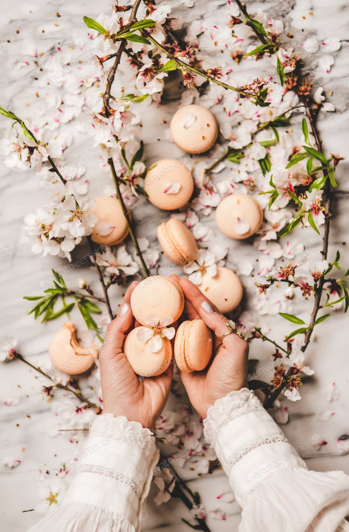 Womans hands holding macaron cookies and white spring blossom flowers