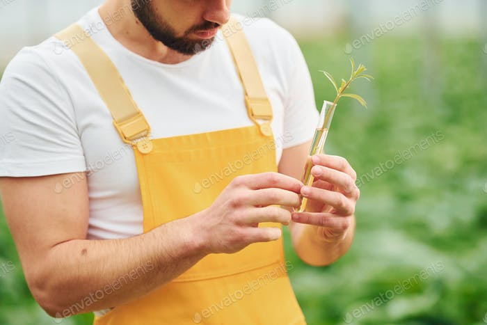 Young greenhouse worker in yellow uniform have job inside of hothouse