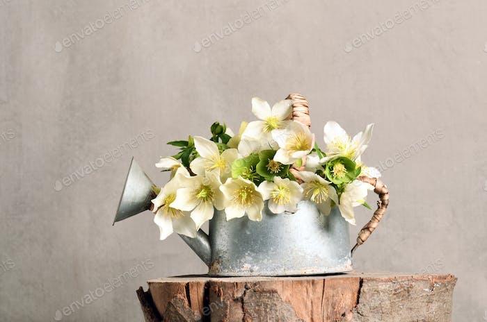 Arrangement of first spring flowers