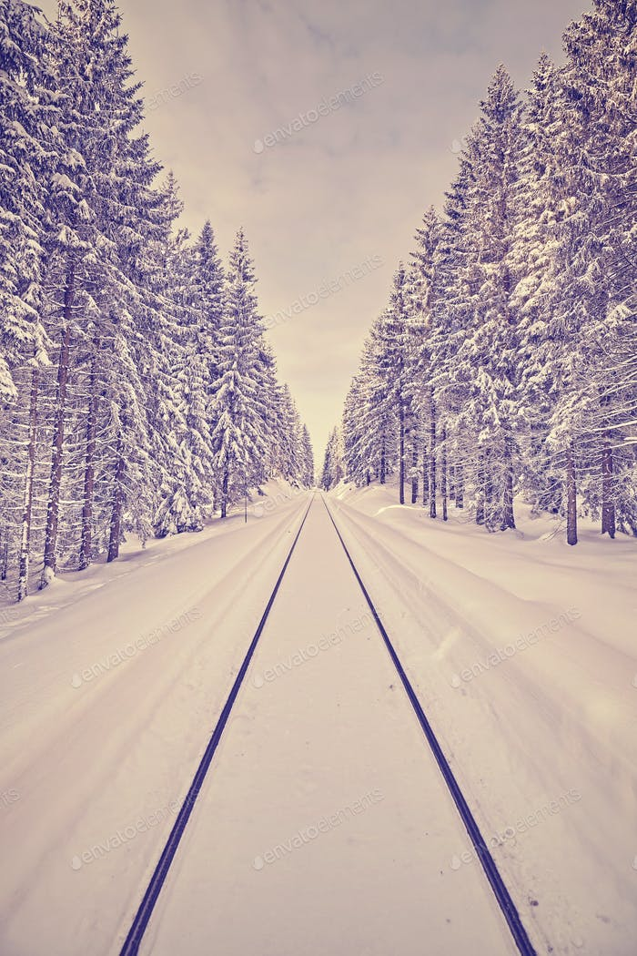 Purple toned winter forest with railroad tracks