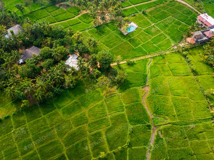 Rice Terrace Aerial Shot. Image of beautiful terrace rice field in Thailand