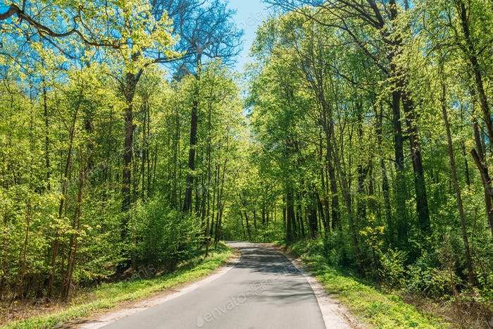 Asphalt Road Through Spring Trees Woods Forest In Sunny Day. Sun