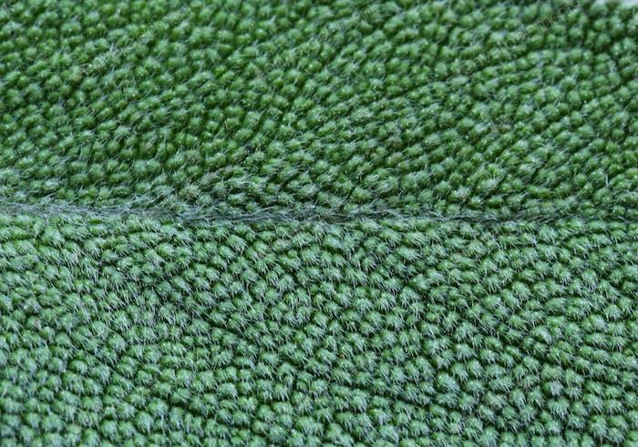 Hierba Salvia