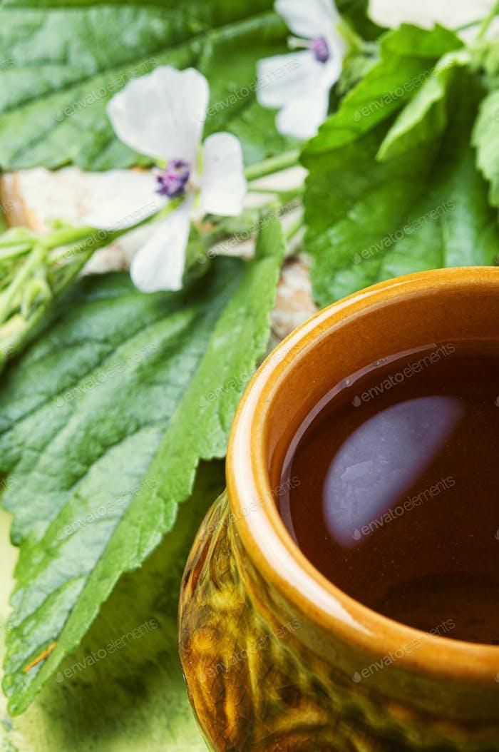 Medicinal plant althaea