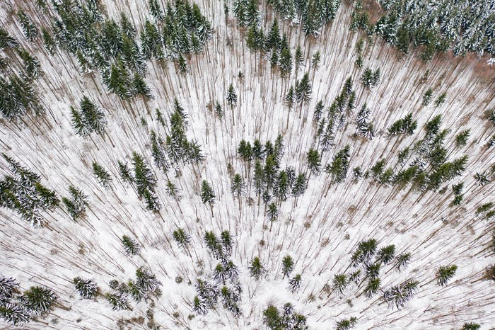 Aerial drone view of a winter landscape. Snow covered forest.