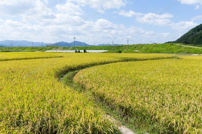 Walking path in Rce field