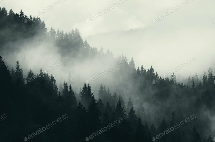 Fog over mountain pine tree forest landscape