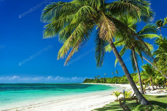 Palm trees on a white sandy beach at Plantation Island, Fiji