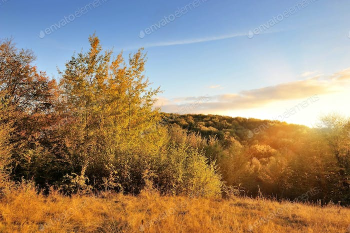 Autumn landscape with colorful trees. Sunset. Autumn time