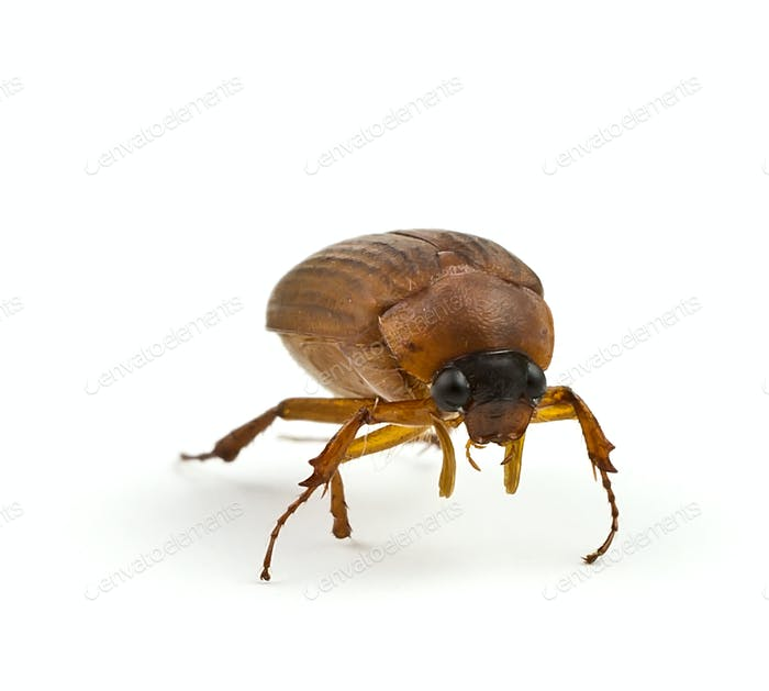Insect.