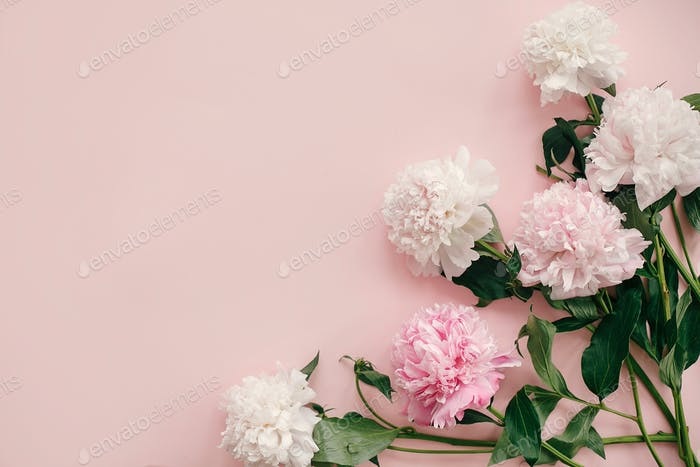 Pink and white peonies border on pastel pink paper