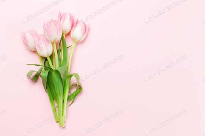 Rosa Tulpen auf rosa Hintergrund