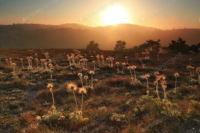 Flowers on the sunset in the valley