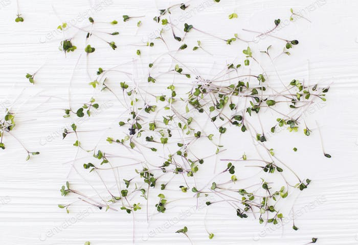 Fresh red cabbage sprouts, cut stems on white wood, top view. Kohlrabi microgreens