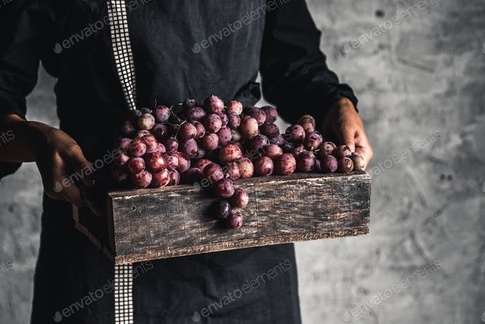 Autumn harvest. Fresh grapes bunch in wooden box. Ripe grape in woman hands