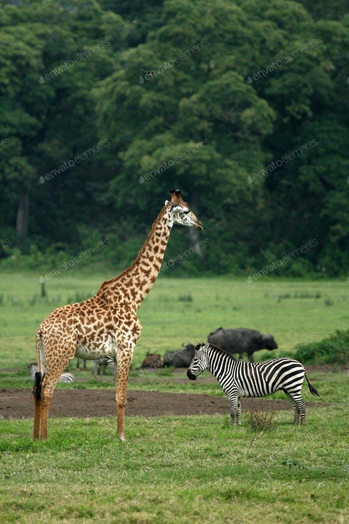 Tansania, Afrika