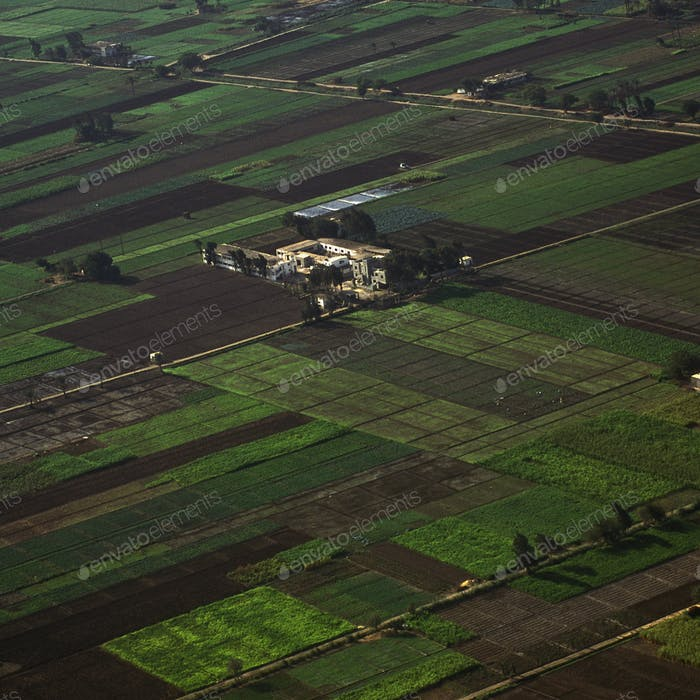 Agricultural Fields in the Nile Valley