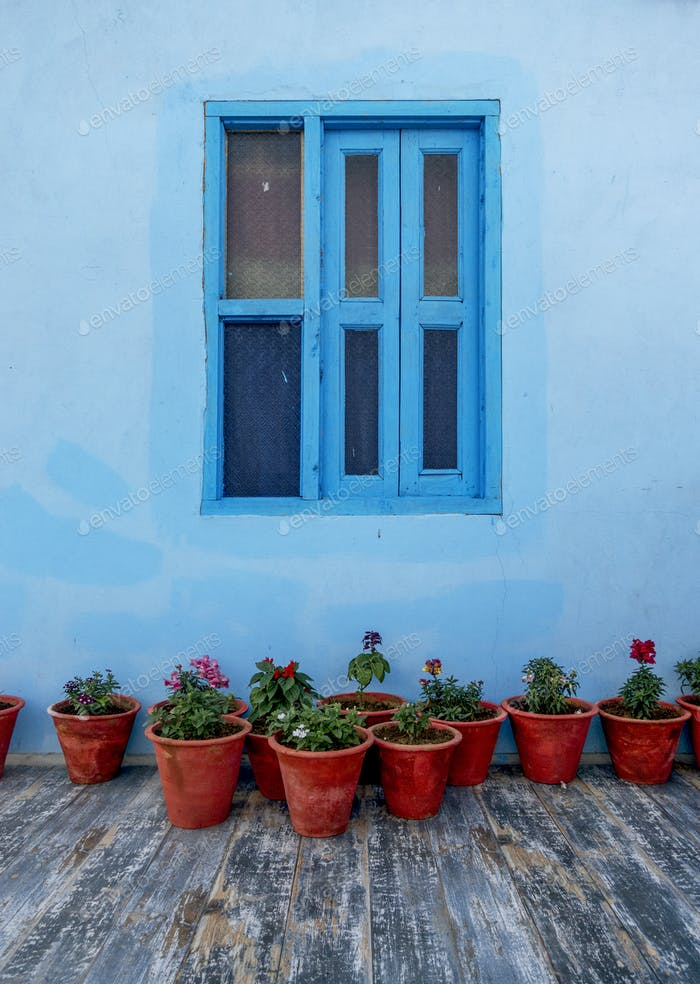 Flower pots with blue wall
