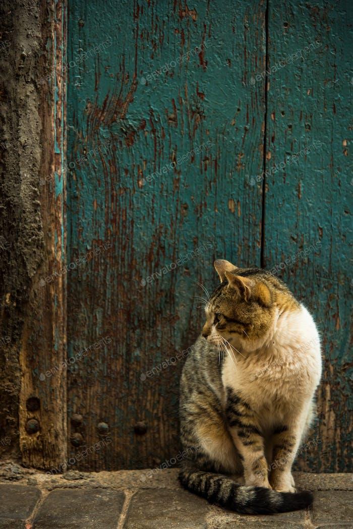 Katze sitzt in der alten Straße in Marokko