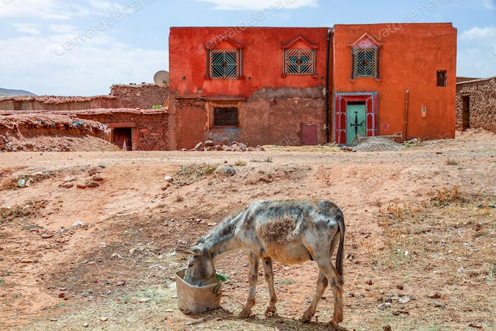 Donkey in front of an old house