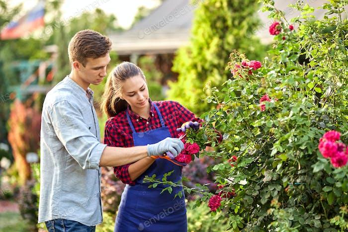Junge und Mädchen Gärtner schneiden den Rosenstrauch in den wunderschönen Garten an einem sonnigen Tag