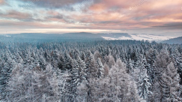 Sunrise Over Snowy Pine Trees. Beautiful Sky and Clouds. Aerial Drone View