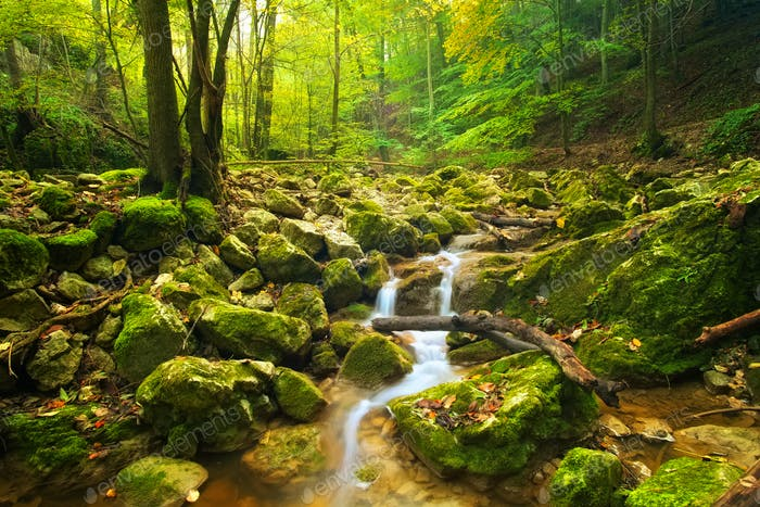 Stream in autumn forest