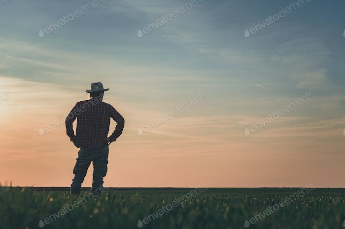 Rear view of satisfied farmer in wheatgrass field