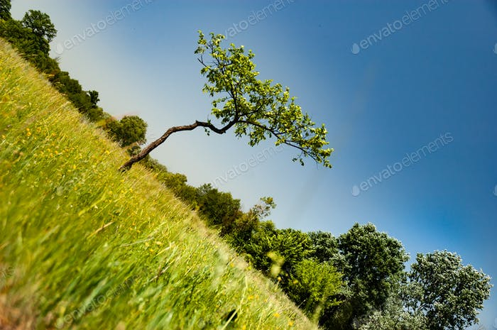 Dutch corner shot beautiful tree with curved trunk