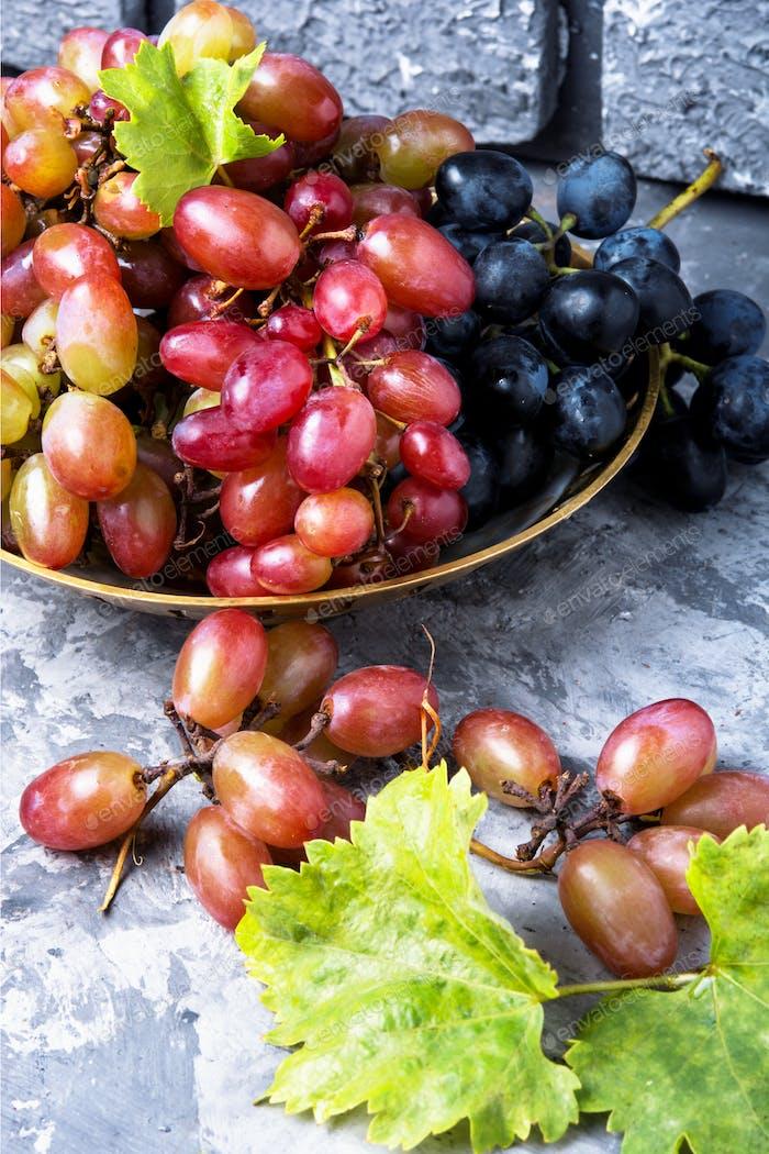 Saisonale Herbsttrauben