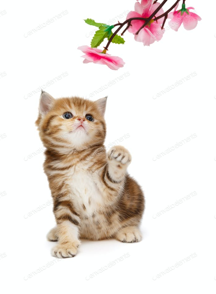 Small  kitten and decorative flower