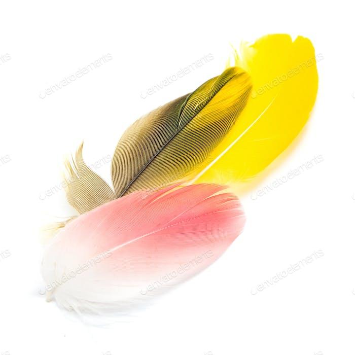 bird feathers isolated