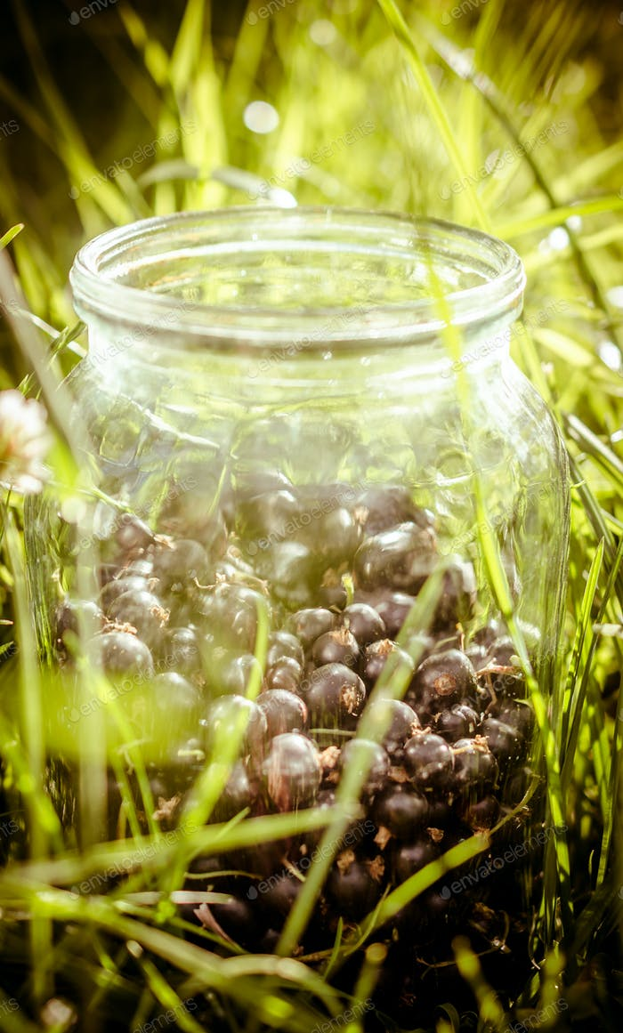 Jar of black currant in the grass