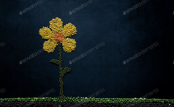 legumes background