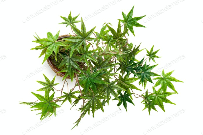 Artificial cannabis plant isolated on white background
