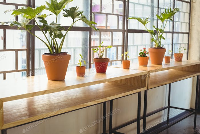 Close up view of flowerpots in a line on a wooden table