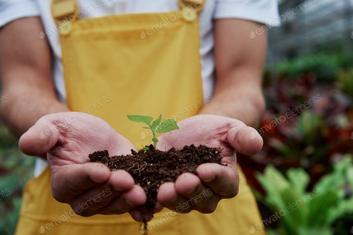 Ecology conception. Mens hands holding the soil with little plant in the middle