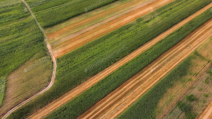 Agriculture Field Aerial View