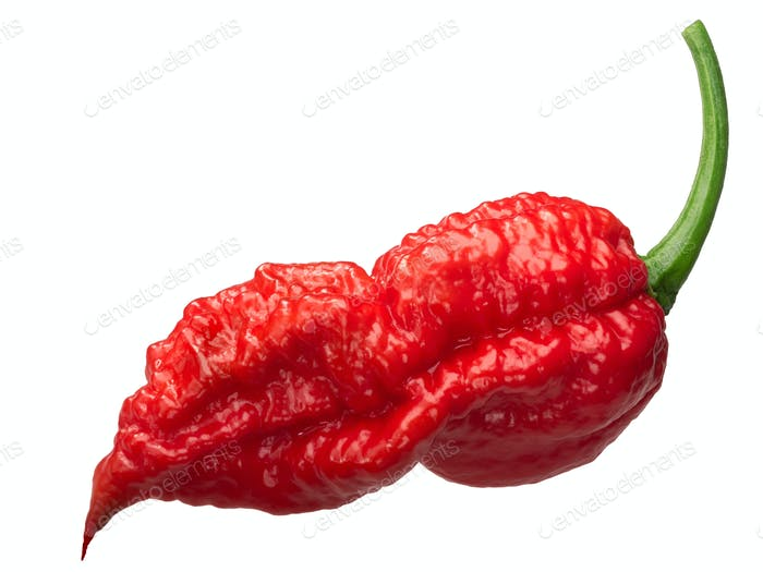 Bhut Jolokia ghost pepper c. chinense, paths