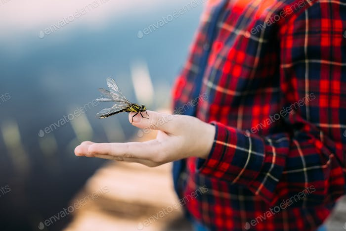 Dragonfly Sits On Finger Of Boy. Taking Care Of Nature.
