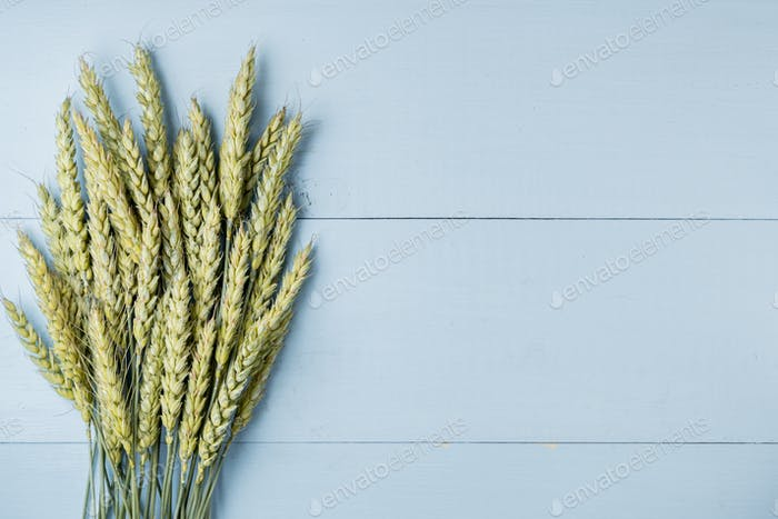 Green wheat ears on blue wooden background
