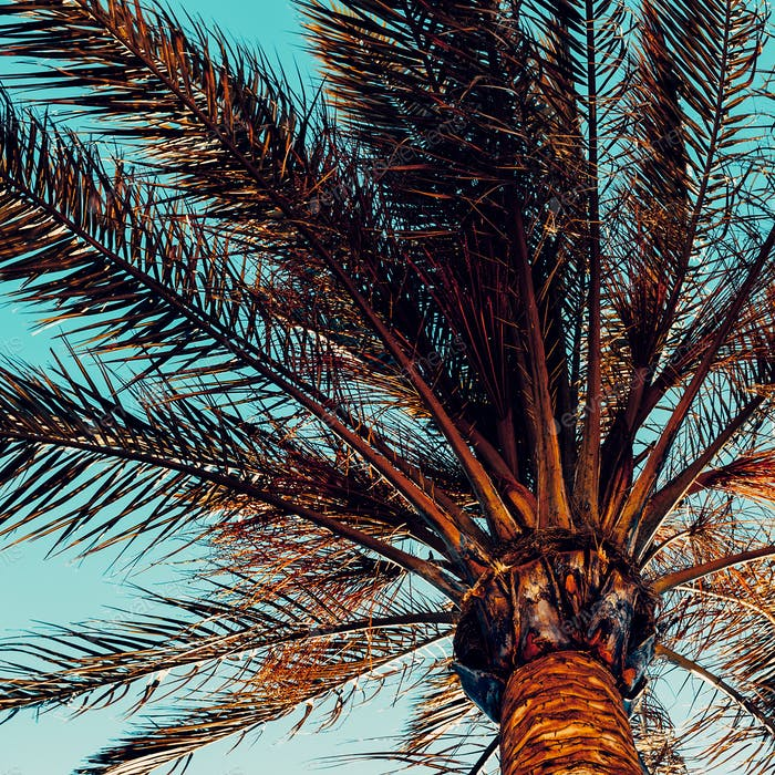 Palm background. Minimal style