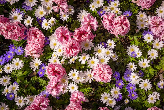 Shot Of Colorful Flowers.  Floral Background