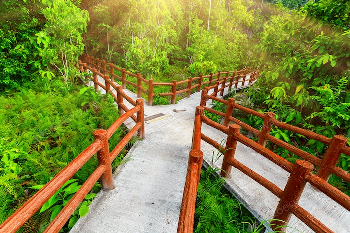 crossed bridges in tropical forest