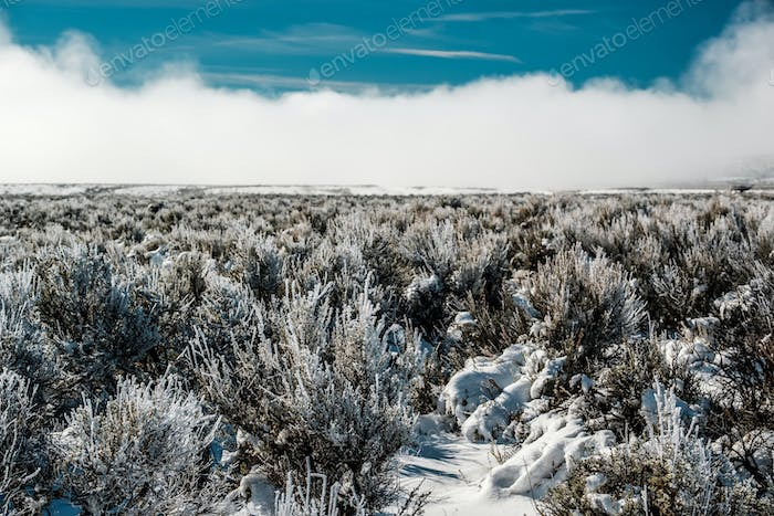Landscape with hoarfrost