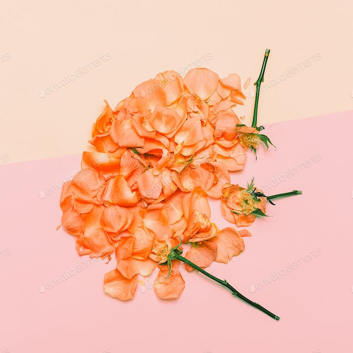 Minimal creative design. rose petals on pastel background. Art H